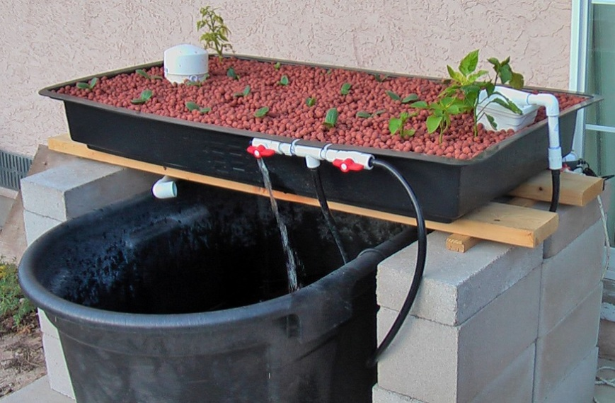 cheap-aquaponics-system